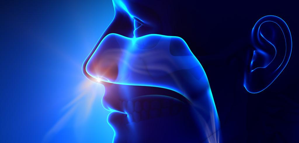 Tudj meg többet a légzőrendszerről